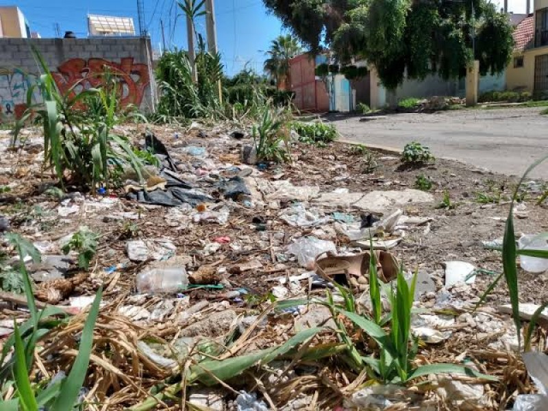 Podrá ayuntamiento limpiar lotes baldíos