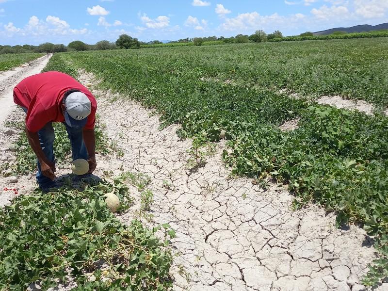 Podría estar en riesgo próximo ciclo agrícola