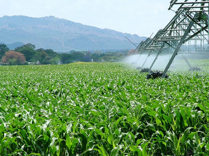 Podrían llegar empresas agroindustriales a Nayarit