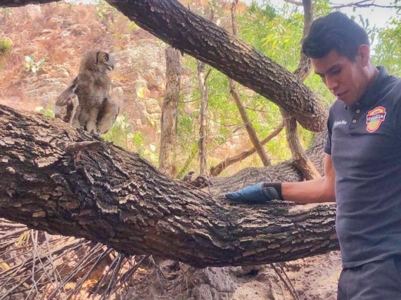 Policía ambiental continua trabajando en la liberación de especies