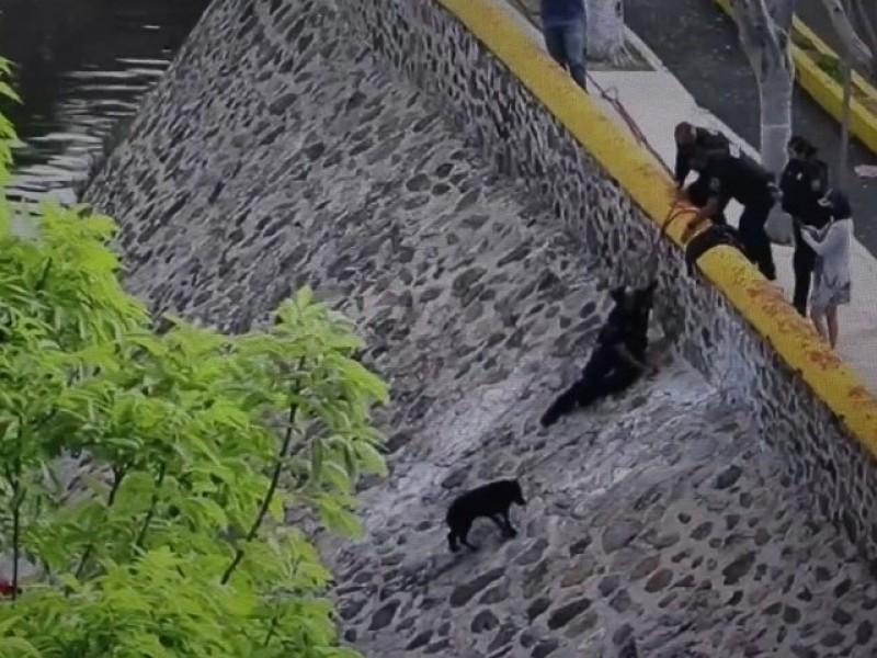 Policías rescatan a canino en el Río Querétaro