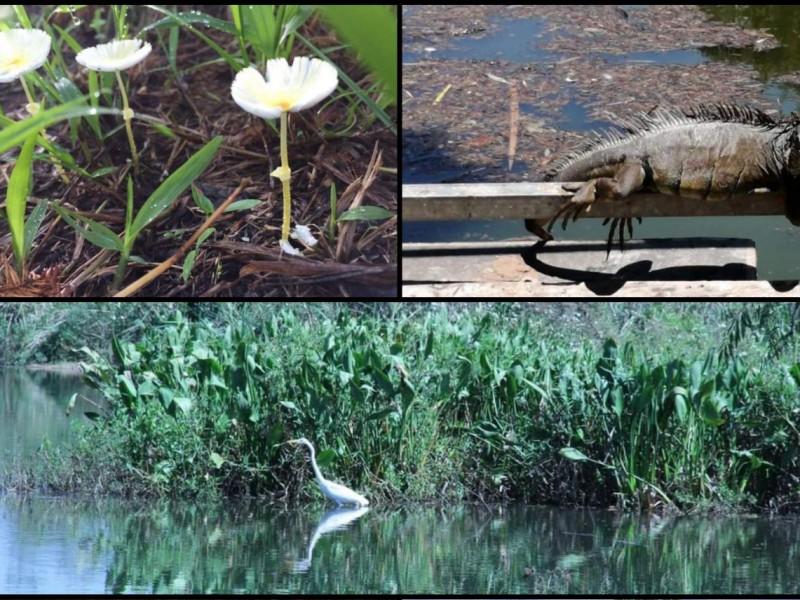 Por confinamiento social y lluvias, parque ecológico recuperó su biodiversidad