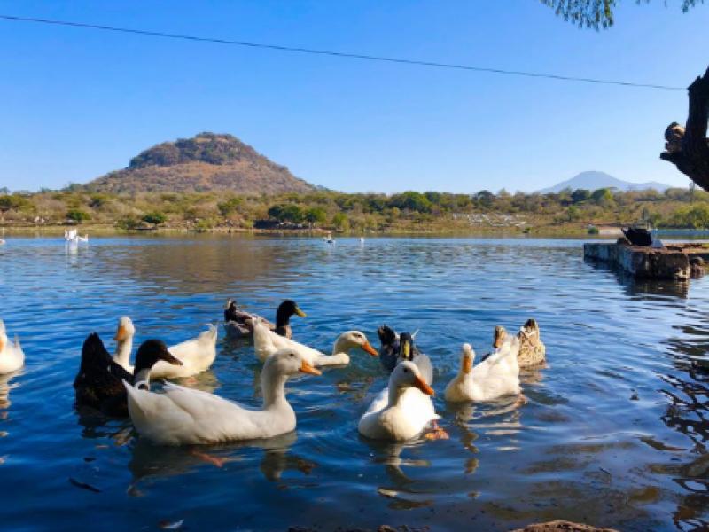 Por contingencia, no reabrirán lagos ni parques de Jacona