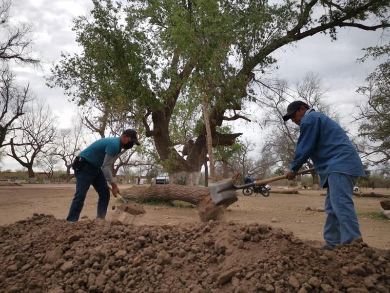 ¡Por fin! Inician Programa de reforestación en el Río Mayo