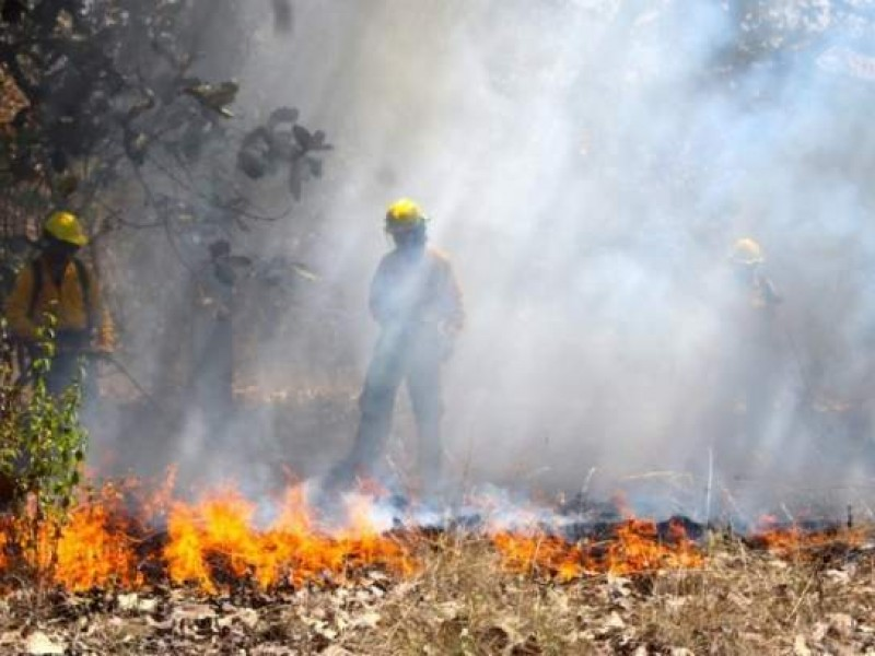 Por incendios forestales declaran emergencia para 5 municipios de Oaxaca