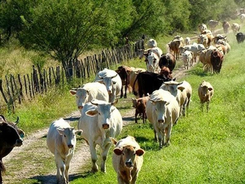 Precio de la carne se mantiene en Chiapas