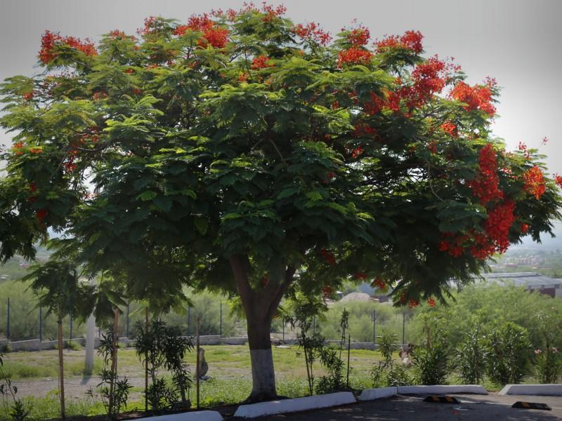 Predomina en Hermosillo vegetación tropical y selvática