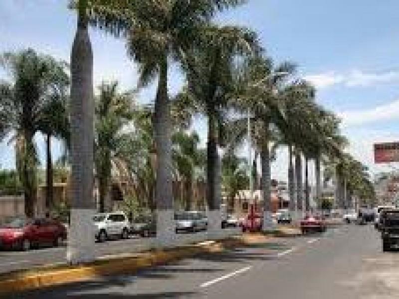 Preocupa a Ecologistas renovación de la Av. Jacarandas