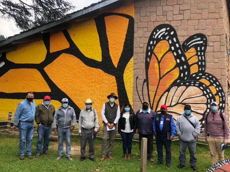 Preparan apertura de Santuarios de la Mariposa Monarca