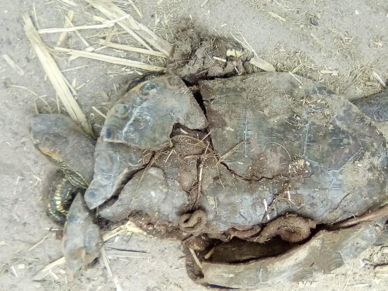 Presentarán evidencia legal por daño ecológico en Cañón de Fernández