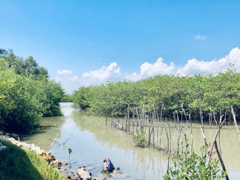 Prestadores de servicios turísticos dispuestos a limpiar manglares
