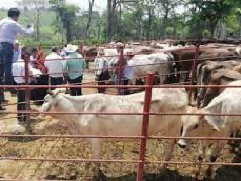 Prevén ganaderos incremento de abigeato ante falta de recursos