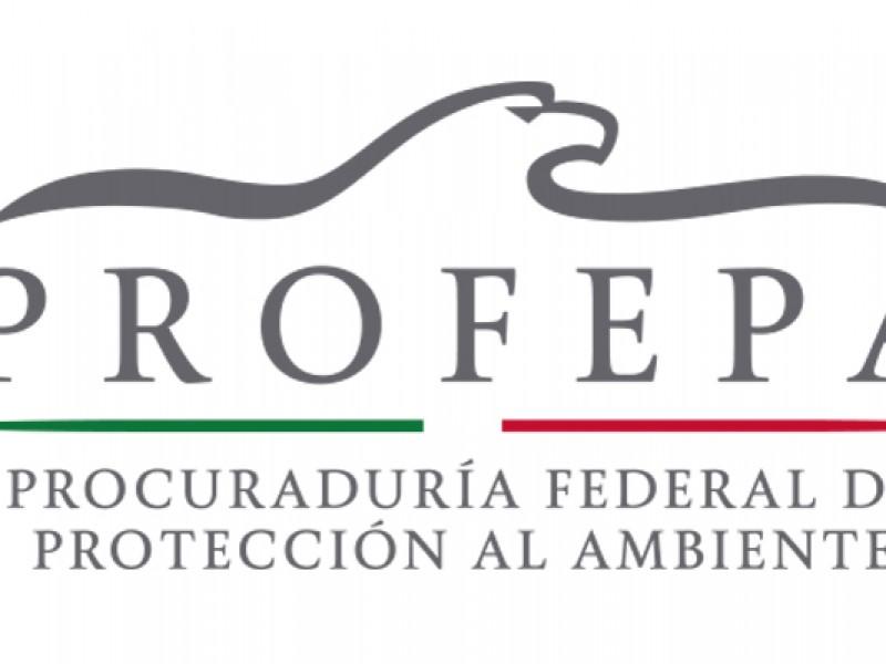 Procuraduría ambiental denunciará invasión en manglar de Mazatlán