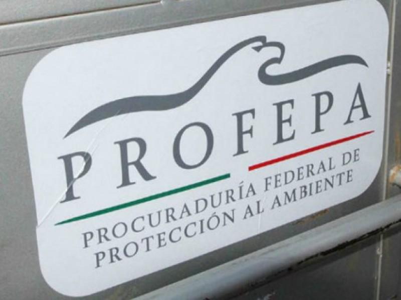 Procuraduría Ambiental detiene ingreso de madera estadounidense