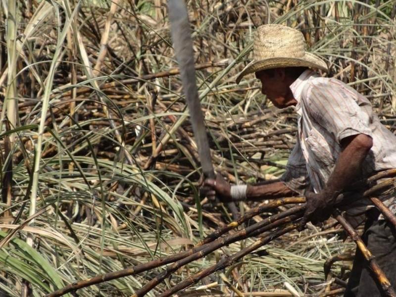 Producción de azúcar, cerca del millón de toneladas