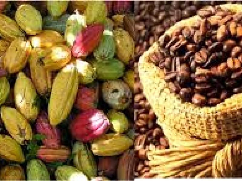 Producción de café y cacao se mantiene pese a pandemia