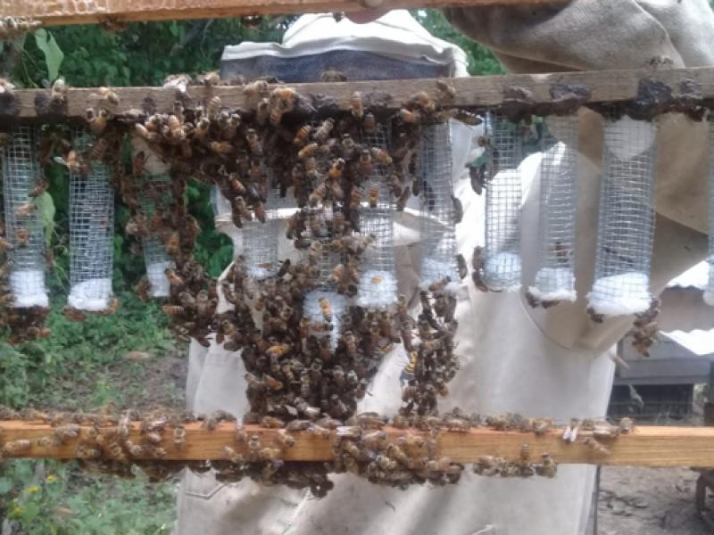 Producción de miel se reduce 40 por ciento
