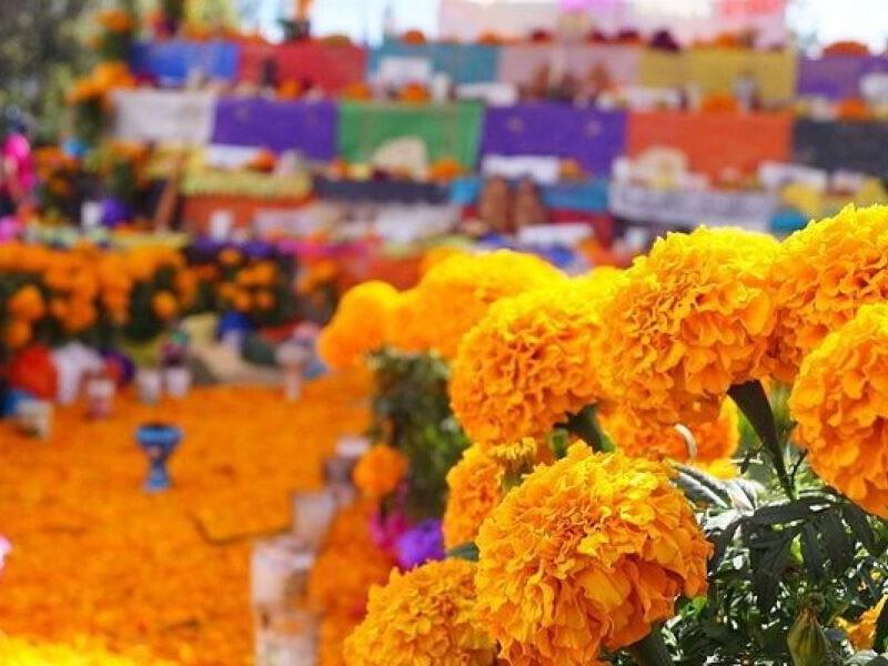 Producción e historia de las flores de Cempasúchil