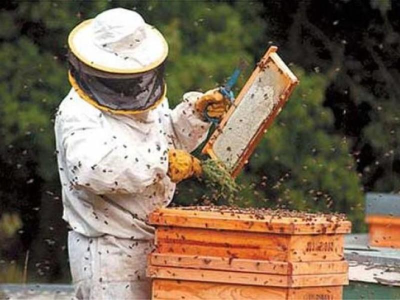 Producción para el Bienestar 2021 apoyará a productores de miel