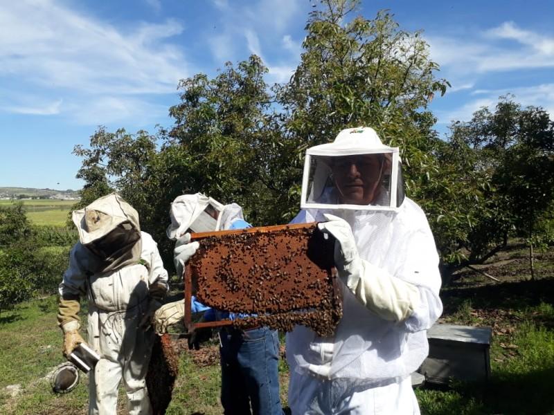 Producciones agrícolas en riesgo por aniquilación de abejas