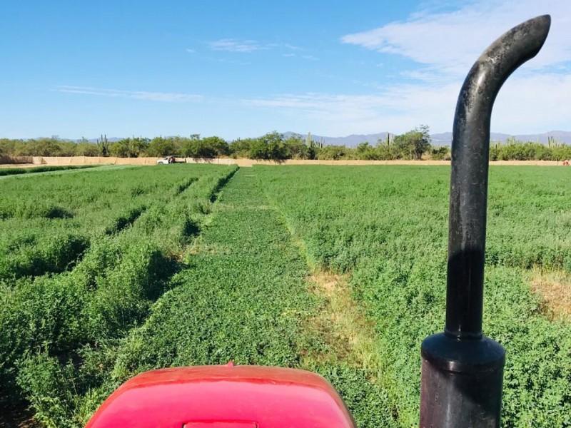 Producciones agrícolas se encuentran en desplome