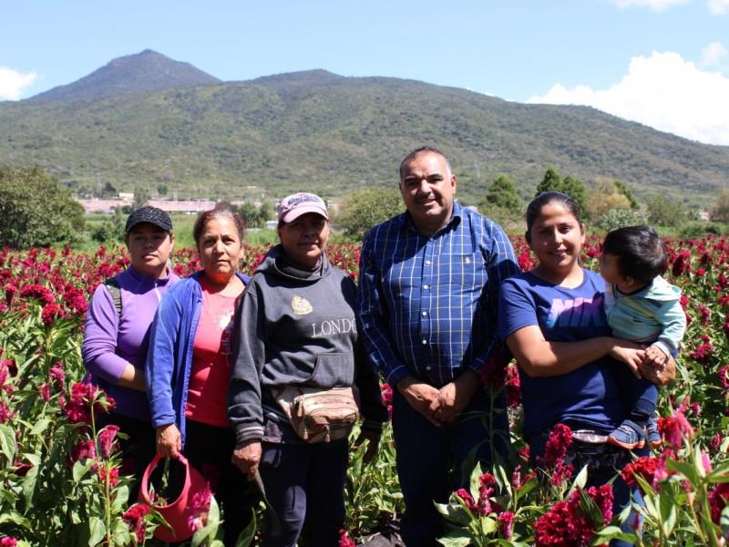 Productoras de flores se posicionan en los mercados regionales
