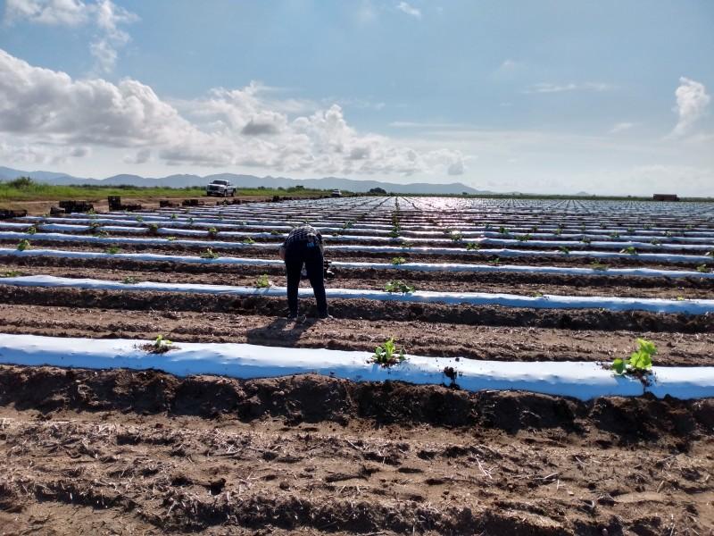Productores agrícolas abordarán a AMLO
