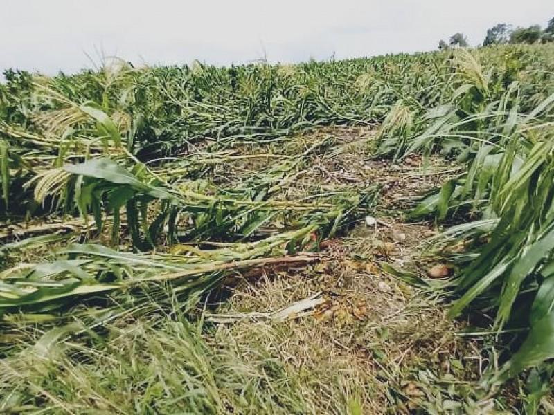 Productores agrícolas en espera del Seguro Catastrófico