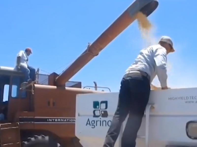 Productores Agrícolas reciben apoyo para siembra