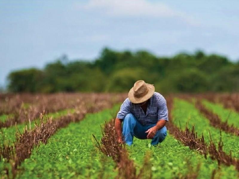 Productores agrícolas temen por su seguridad