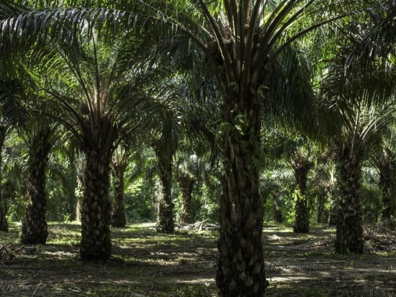 Productores de aceite piden frenar importación