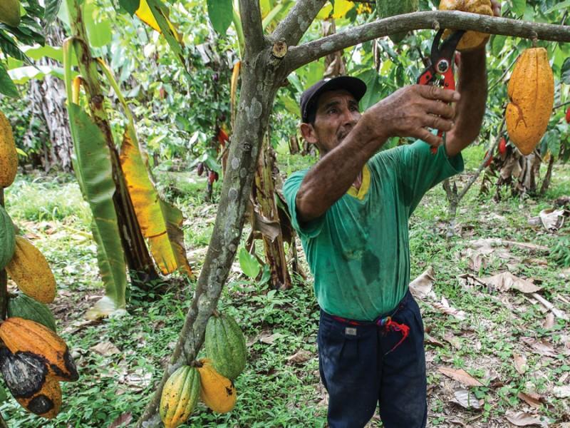 Productores de cacao demandan apoyo