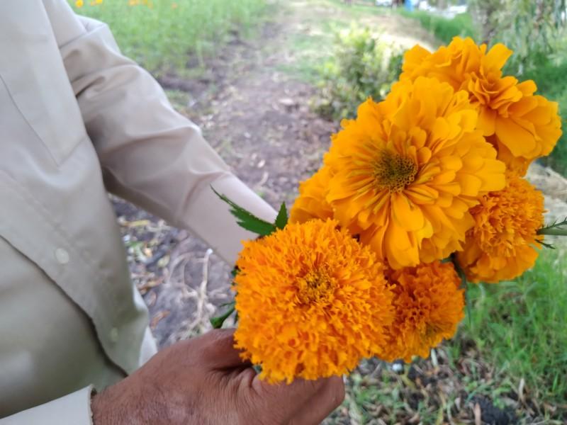 Productores de flor de cempasúchil esperan repunte en ventas