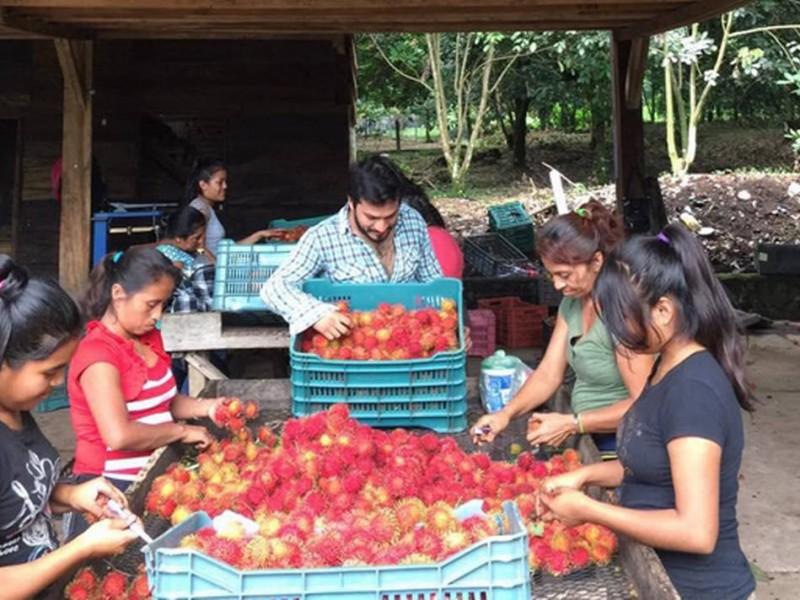 Productores de rambutan recuperan volumen de exportaciones