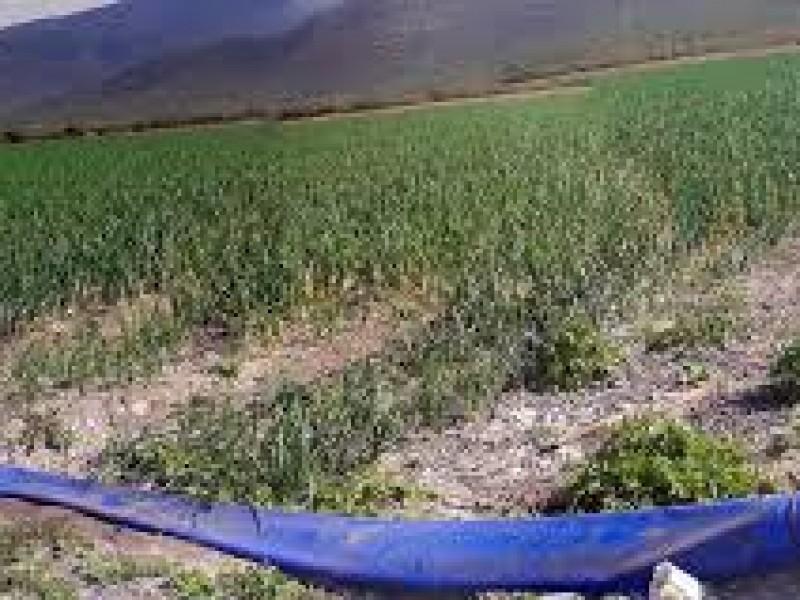 Productores de riego deben reinscribirse al programa especial de energía