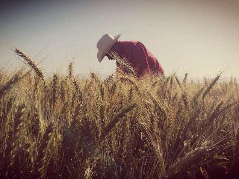Productores de trigo advierten tomarán carretera México 15