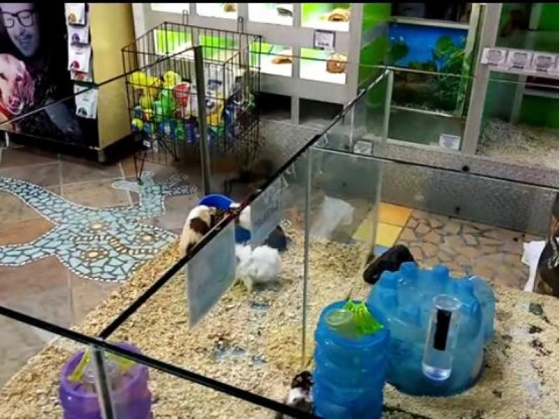 Profepa puede multar o clausurar a tienda de mascotas: Earth-Mission