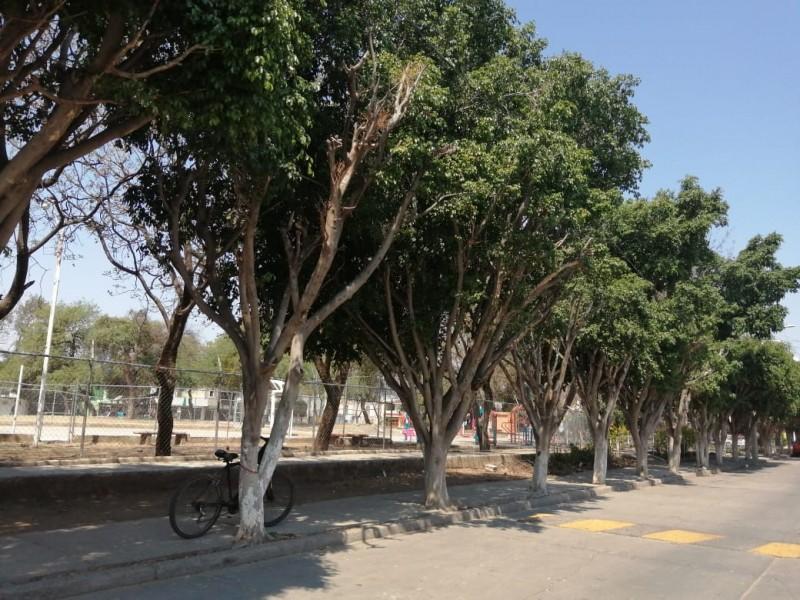 Programas sustentables para mejorar los parques urbanos