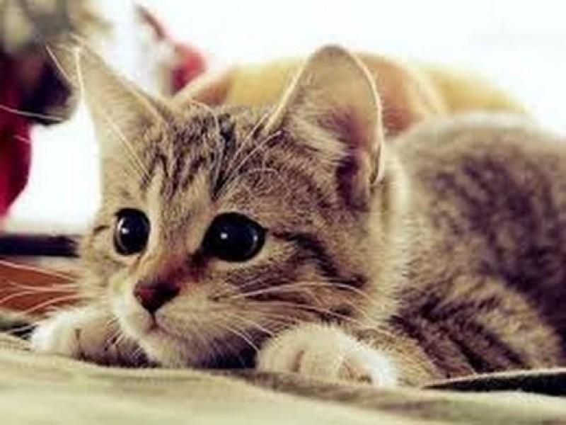 Prohíben la existencia de gatos