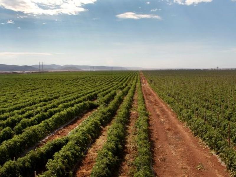 Prohibición de glifosato, duro golpe a la agricultura: Fundación Produce