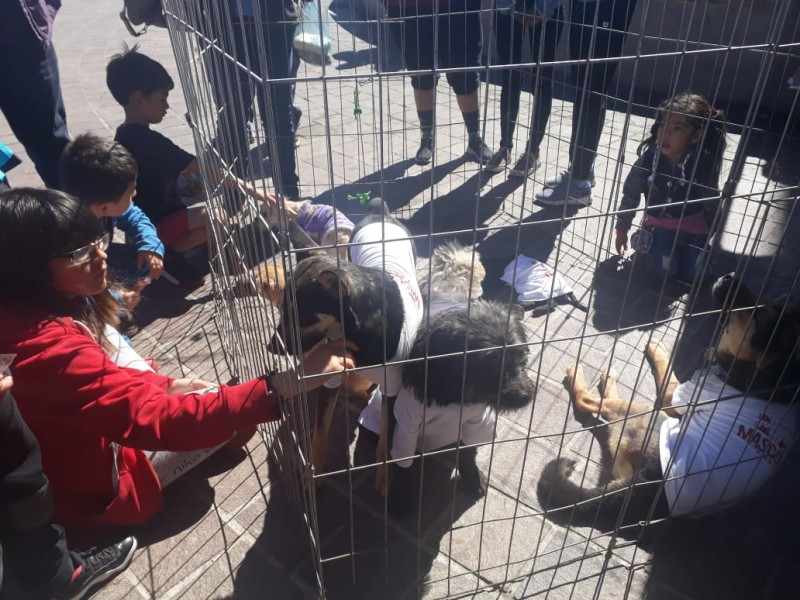 Promueven adopción responsable en el Mascotafest de Zacatecas