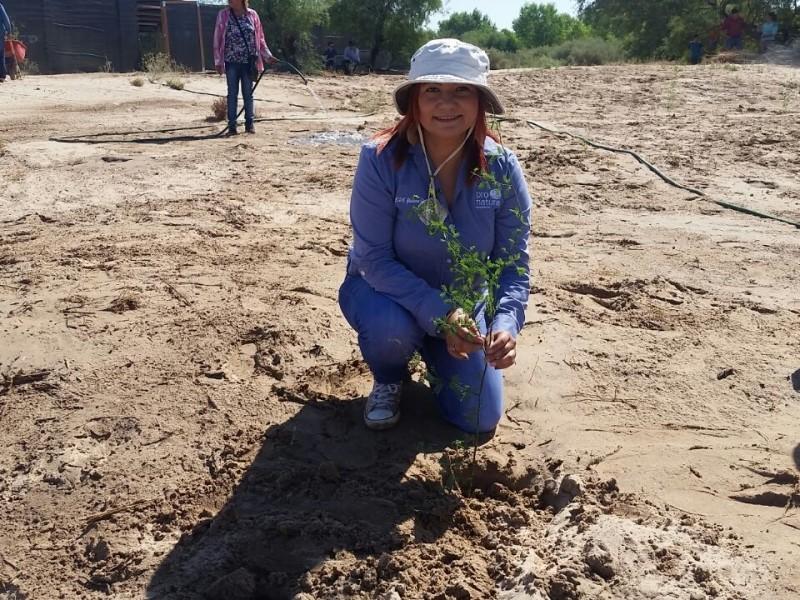 ProNatura combate cambio climático con reforestación