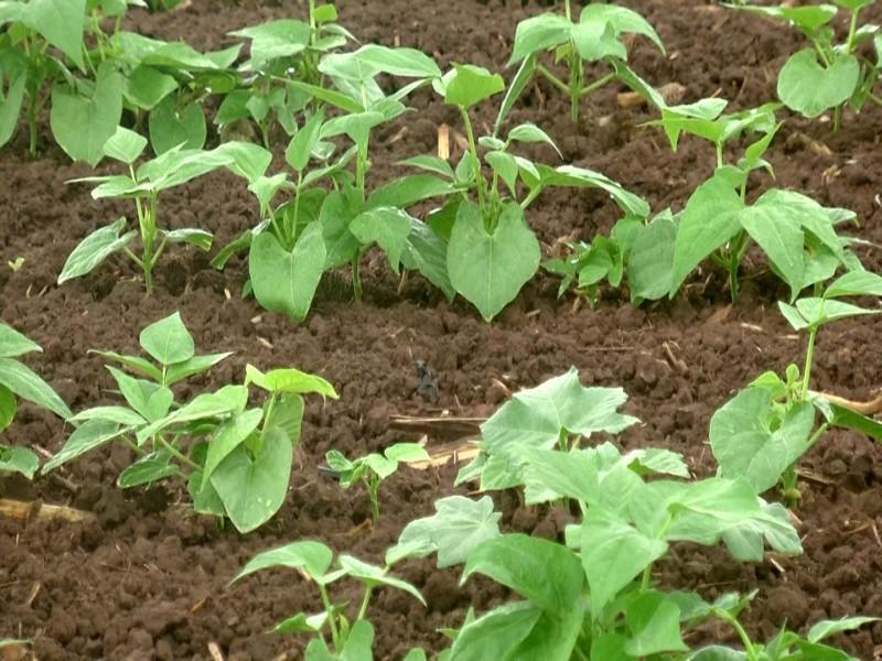 Pronóstico de lluvias pone nerviosos a productores agrícolas