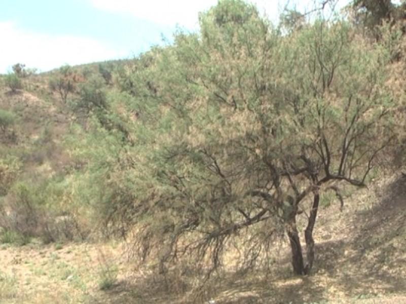 Próxima reunión de cabildo se presentará el reglamento del árbol