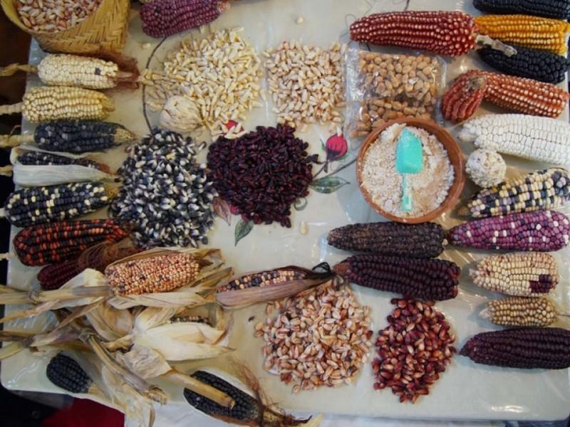 Proyectan agrobiodiversidad para fomentar desarrollo del campo en Chiapas