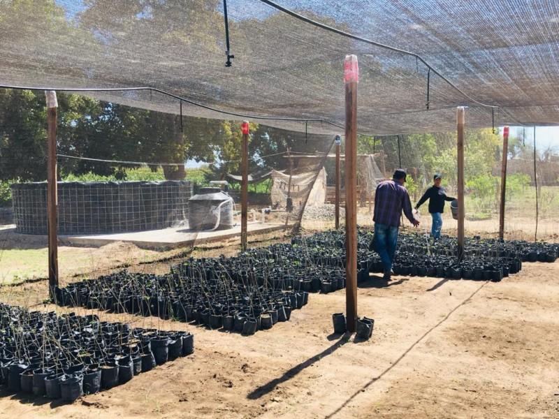 Proyecto Sembrando Vida da empleo a campesinos de la región