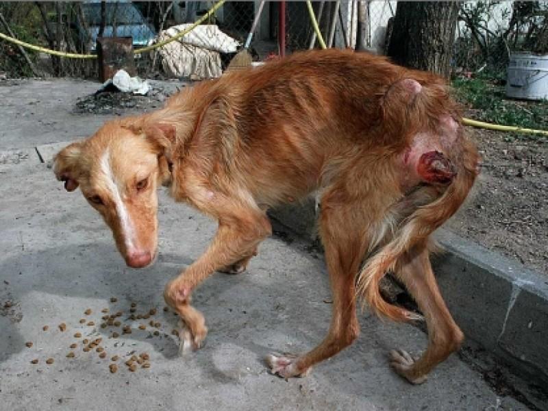 ¿Qué avala la ley de protección animal?