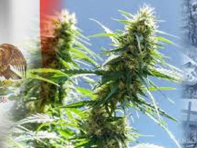 ¿Que sigue en el camino a la despenalización del cannabis?