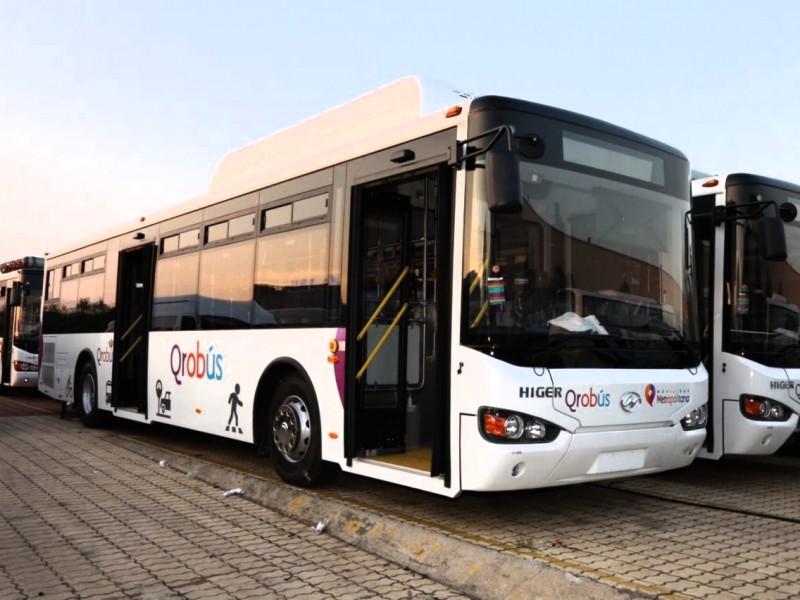 Quieren transporte Rosa en Querétaro