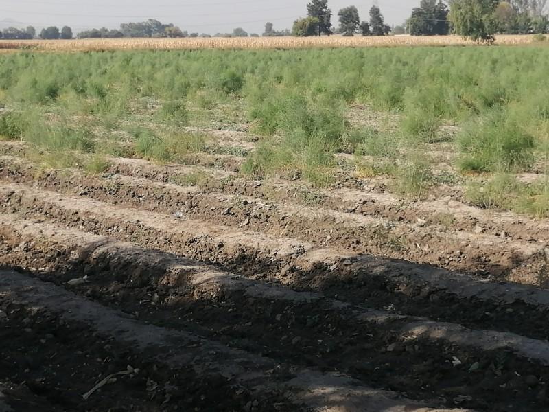 Quitarán 12 mil millones de pesos a la producción agropecuaria